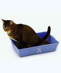 lettiera per gatto di Schrödinger